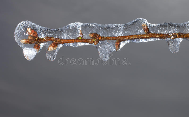 Icicles forming royalty free stock photo