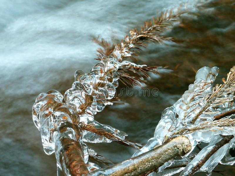 Icicles, frozen twig in the winter royalty free stock image