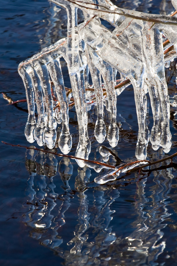 Icicles on a lake. Very special icicles were built on Helga lake in Sweden in March 2008 when a stormy wind was accompanied by a very cold weather. Every straw royalty free stock image