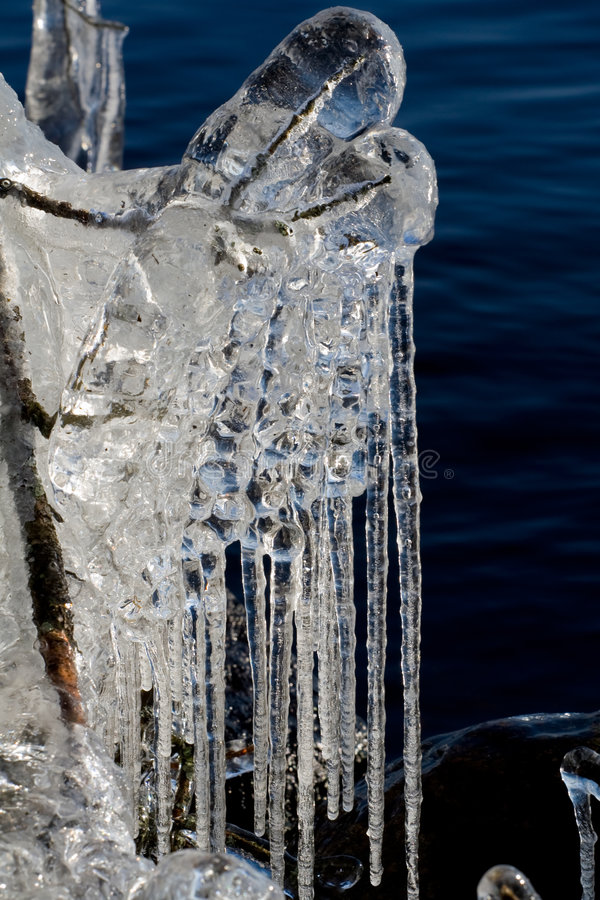 Icicles on a lake. Very special icicles were built on Helga lake in Sweden in March 2008 when a stormy wind was accompanied by a very cold weather. Every straw royalty free stock photography