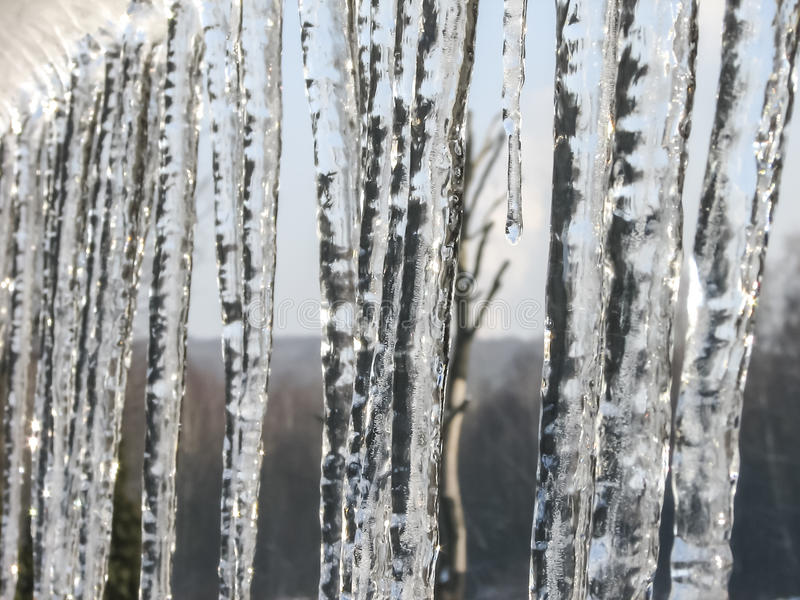 Icicles. Lit by soft light of the rising sun royalty free stock photo