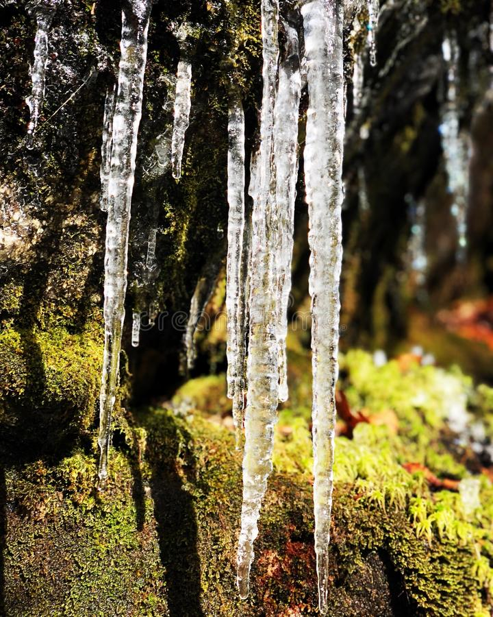 Icicles melting in the sun royalty free stock images