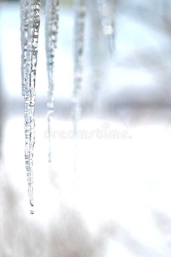 Icicles melting in the winter time stock photos