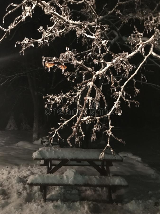 Icicles on tree above snow covered picnic bench at night stock images