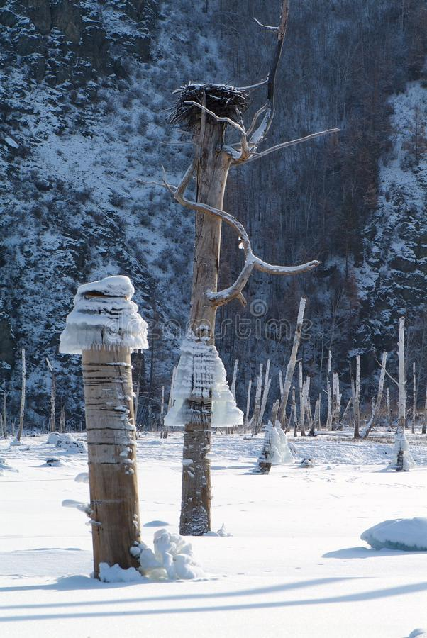 Icicles on a tree, background of mountains in the lake, bird`s nest. Icicles on a tree on a background of mountains in the lake royalty free stock photos