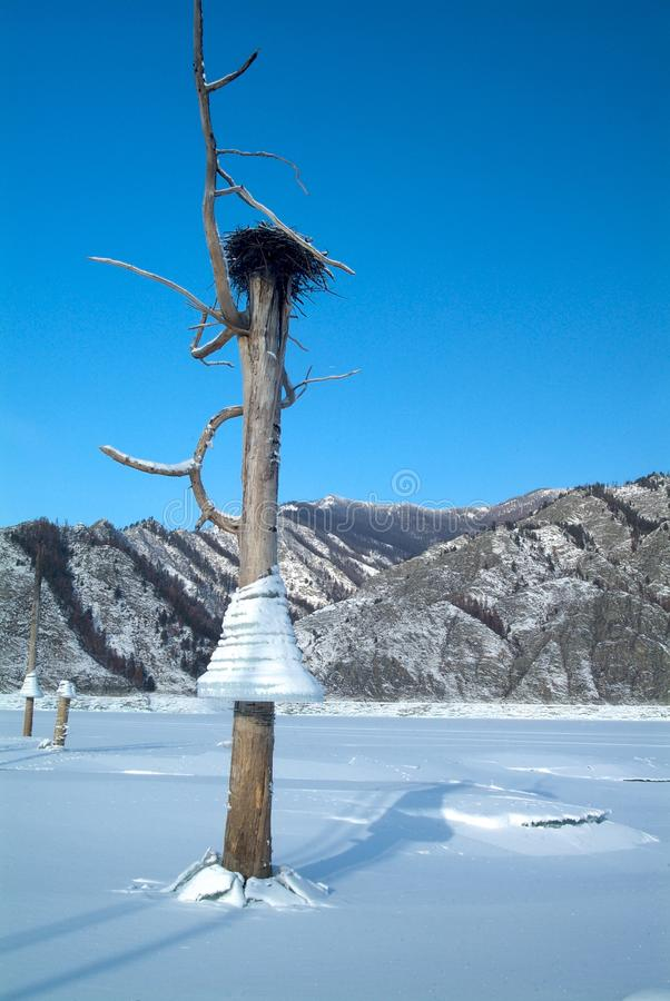 Icicles on a tree, background of mountains in the lake, bird`s nest. Icicles on a tree on a background of mountains in the lake royalty free stock photography