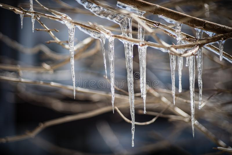 Icicles on tree branches stock image