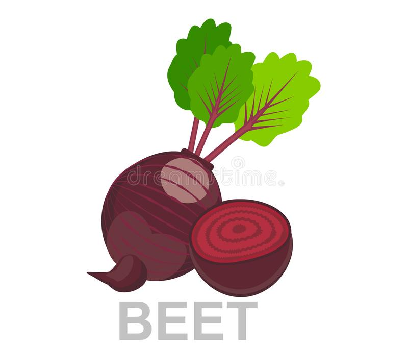 Icon Beet whole and in section. vector sugar Beet illustration isolated - healthy vegetable stock illustration