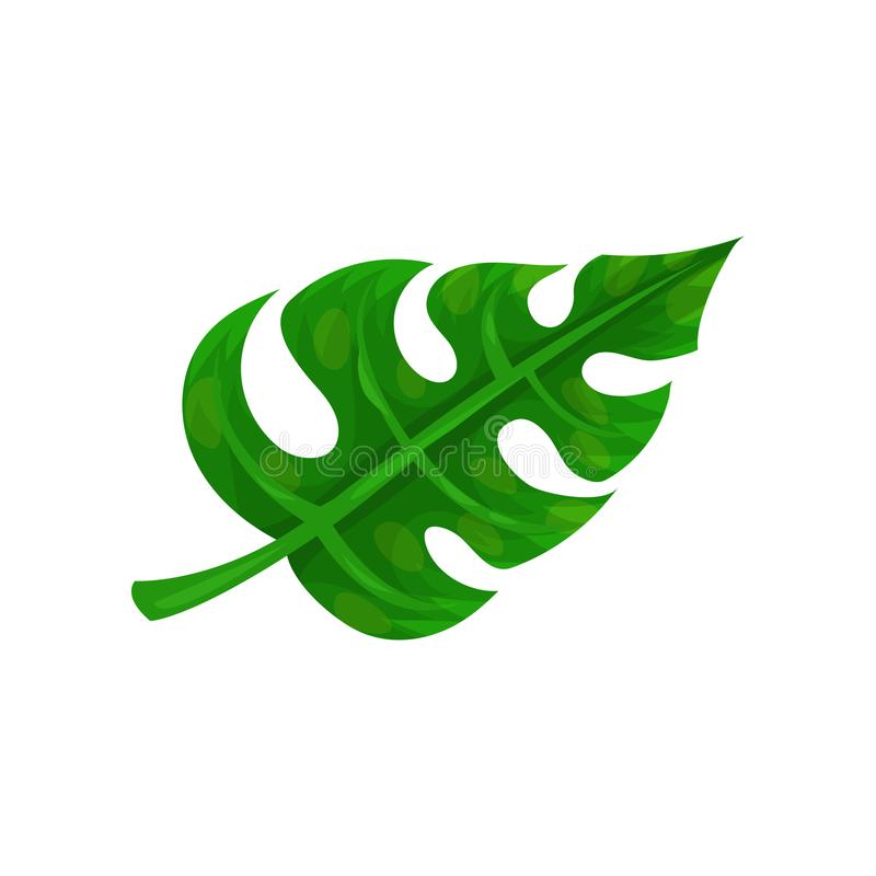 Flat vector icon of big bright green leaf. Natural element tropical plant from jungle. Botanical theme royalty free illustration