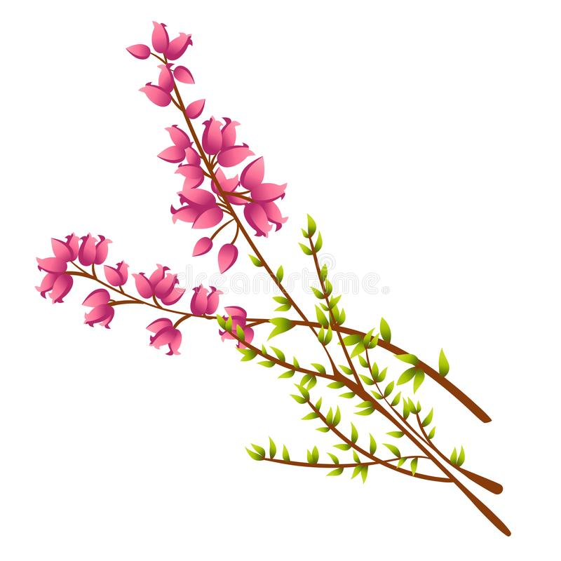 Icon of Calluna Vulgaris or Heather. Vector icon of Calluna Vulgaris, Heather or Ling. The Native Flower of Norway. Isolated elements on white background stock illustration