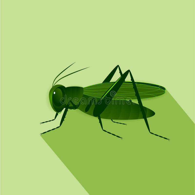 Icon. A green grasshopper on on a green background vector illustration