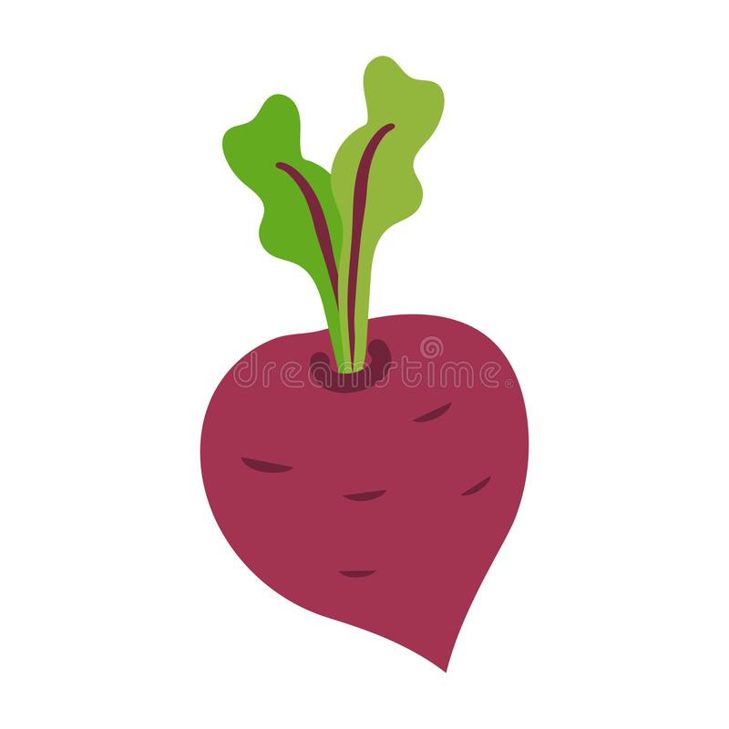 Icon of ripe beetroot with big green leaves royalty free illustration