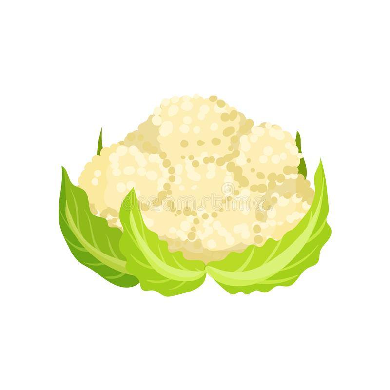 Icon of ripe cauliflower with bright green leaves. Organic and healthy food. Natural farm product. Fresh garden. Vegetable. Colorful vector illustration in flat vector illustration