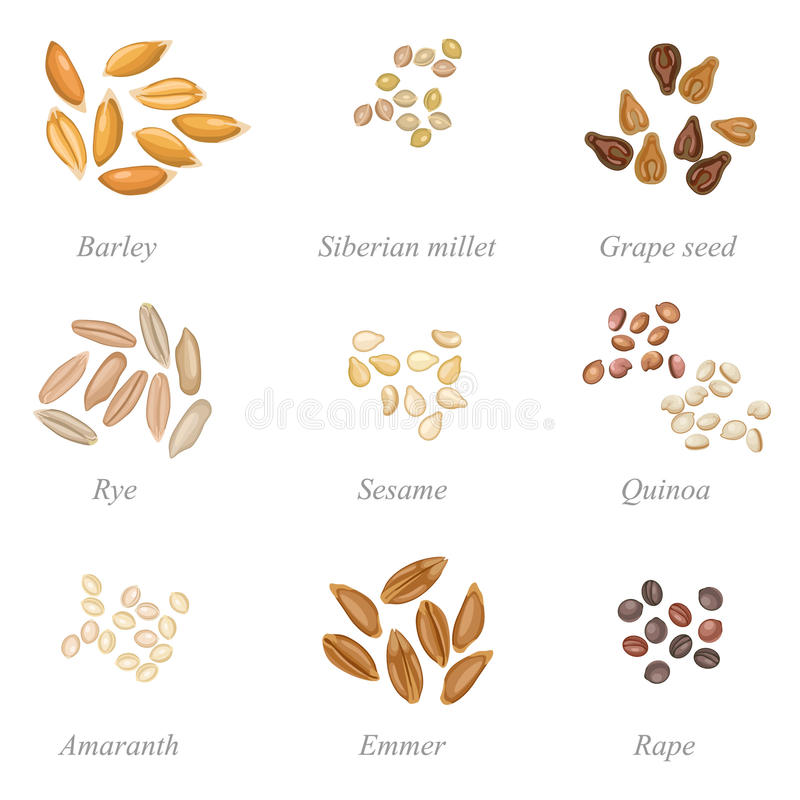 Icon set of cereal grains part 2 stock illustration