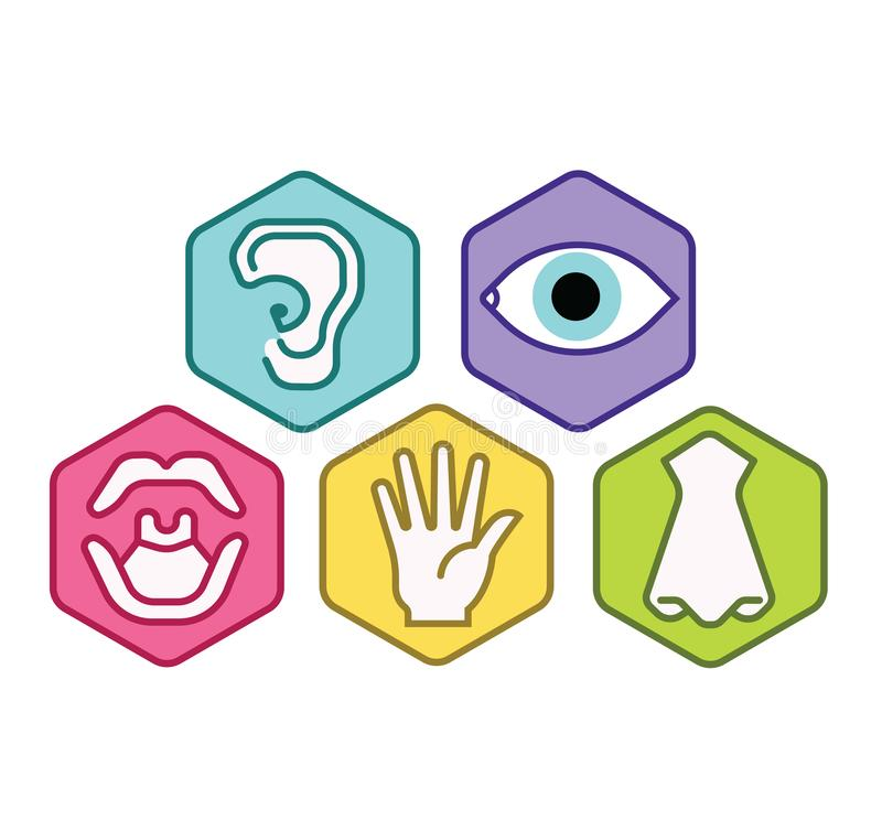 Icon set of five human senses vision eye, smell nose, hearing ear, touch hand, taste mouth. Simple line icon vector color illustra stock illustration