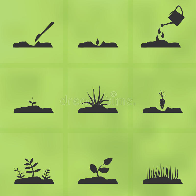 Icon set stages of how to grow a plant from seeds. vector illustration