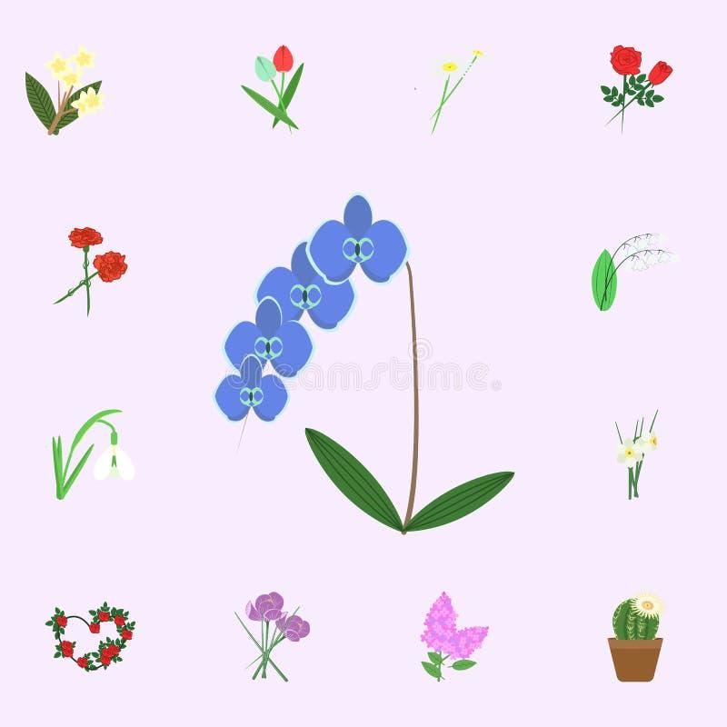 Icona blu di colore del fiore dell'orchidea Insieme universale delle icone dei fiori per il web ed il cellulare royalty illustrazione gratis