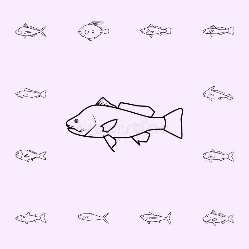 icona d'acqua dolce del tamburo Insieme universale delle icone del pesce per il web ed il cellulare royalty illustrazione gratis