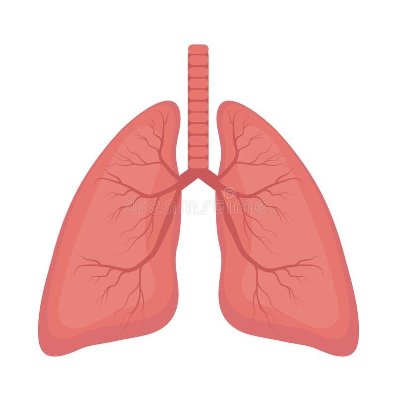 Icona dei polmoni, stile piano Organi interni dell'elemento umano di progettazione, logo Anatomia, concetto della medicina Sanità royalty illustrazione gratis