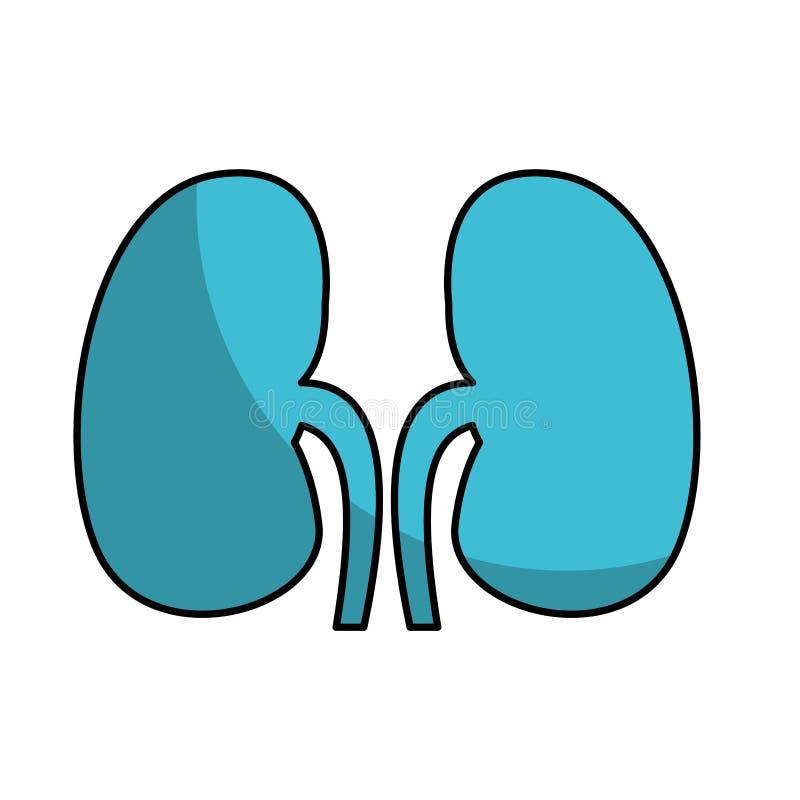Icona dei reni dell'organo umano royalty illustrazione gratis