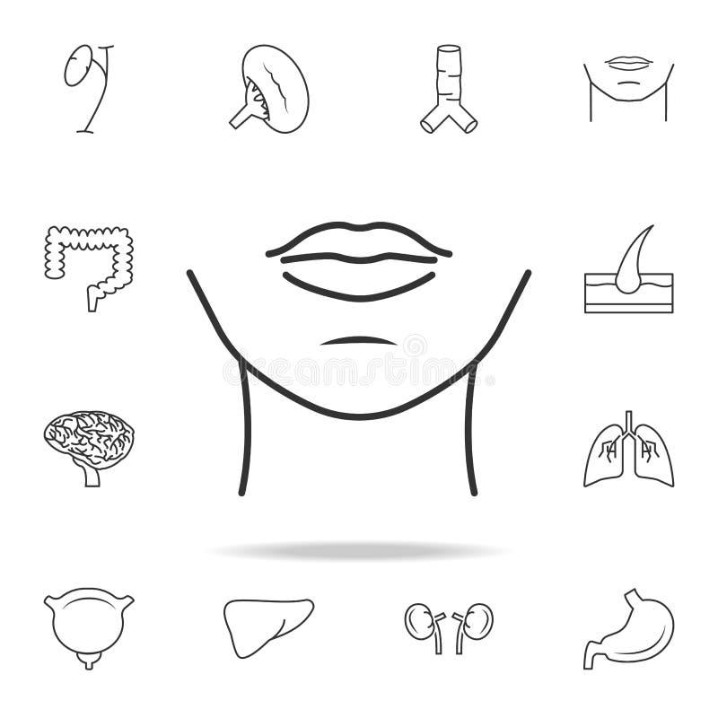 icona del mento della donna Insieme dettagliato delle icone umane della parte del corpo Progettazione grafica di qualità premio U royalty illustrazione gratis