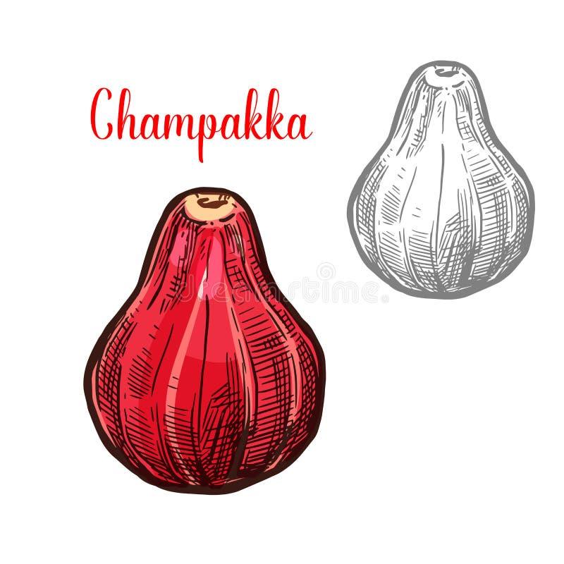 Icona del taglio della frutta di schizzo di vettore di Champakka illustrazione vettoriale
