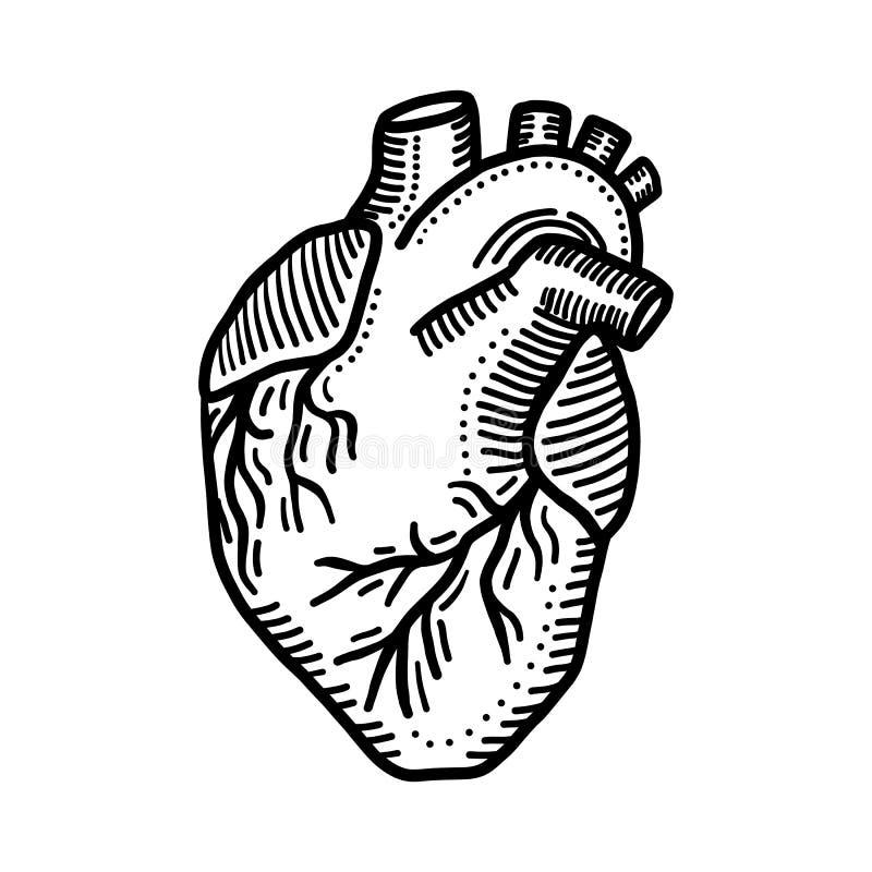 Icona dell'organo del cuore, stile disegnato a mano illustrazione vettoriale