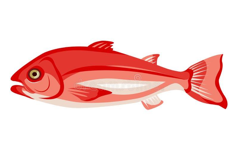 Icona di frammento di rosso grezzo isolato su fondo bianco, cibo sano, pesce intero fresco, illustrazione vettoriale royalty illustrazione gratis
