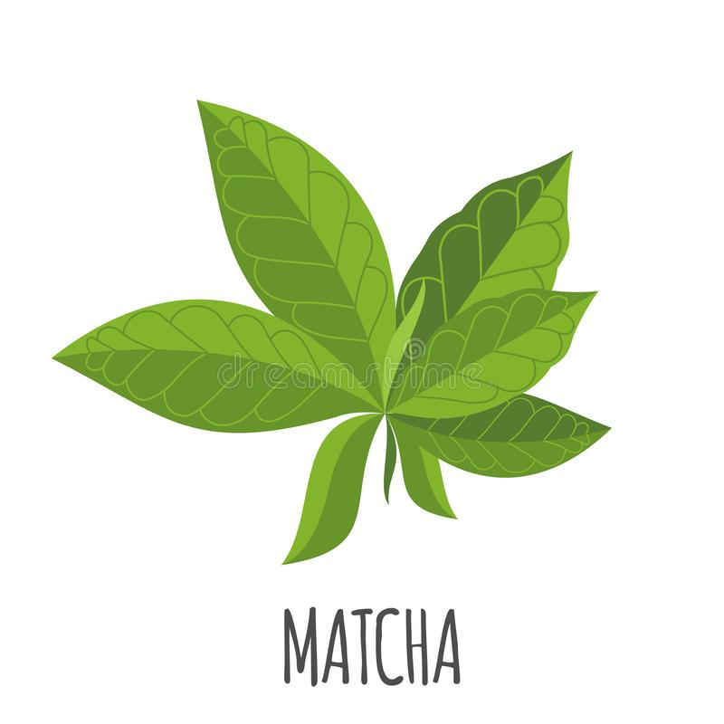 Icona di Matcha nello stile piano isolata su bianco royalty illustrazione gratis