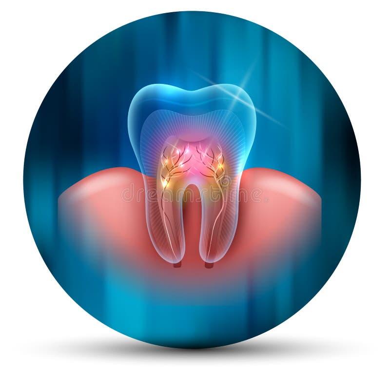 Icona di sezione trasversale del dente illustrazione vettoriale