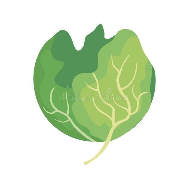 Icona di verdure della lattuga fresca illustrazione vettoriale