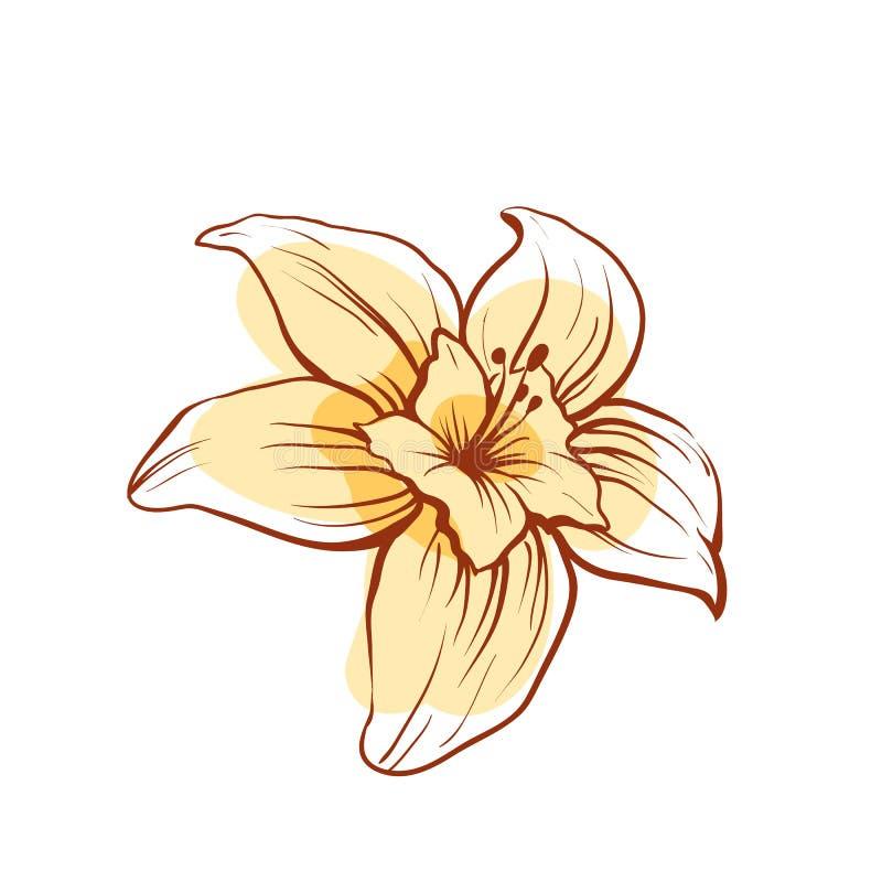 Icona di vettore isolata fiore della vaniglia royalty illustrazione gratis
