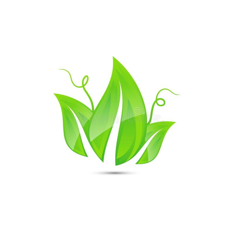 Icona fresca e verde di vettore della natura della foglia che brillante royalty illustrazione gratis