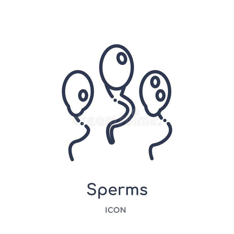 Icona lineare degli spermi dalla raccolta umana del profilo delle parti del corpo Linea sottile icona degli spermi isolata su fon illustrazione di stock