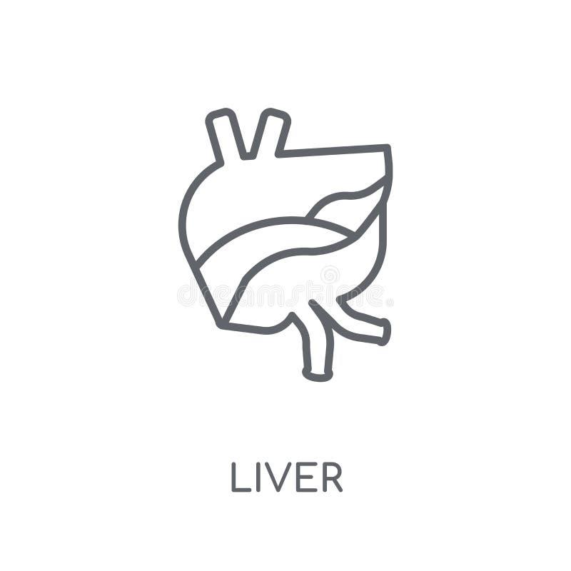 Icona lineare del fegato Concetto moderno di logo del fegato del profilo sulle sedere bianche illustrazione di stock