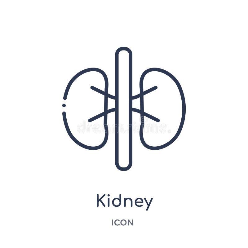 Icona lineare del rene dalla raccolta medica del profilo Linea sottile icona del rene isolata su fondo bianco illustrazione d'ava royalty illustrazione gratis