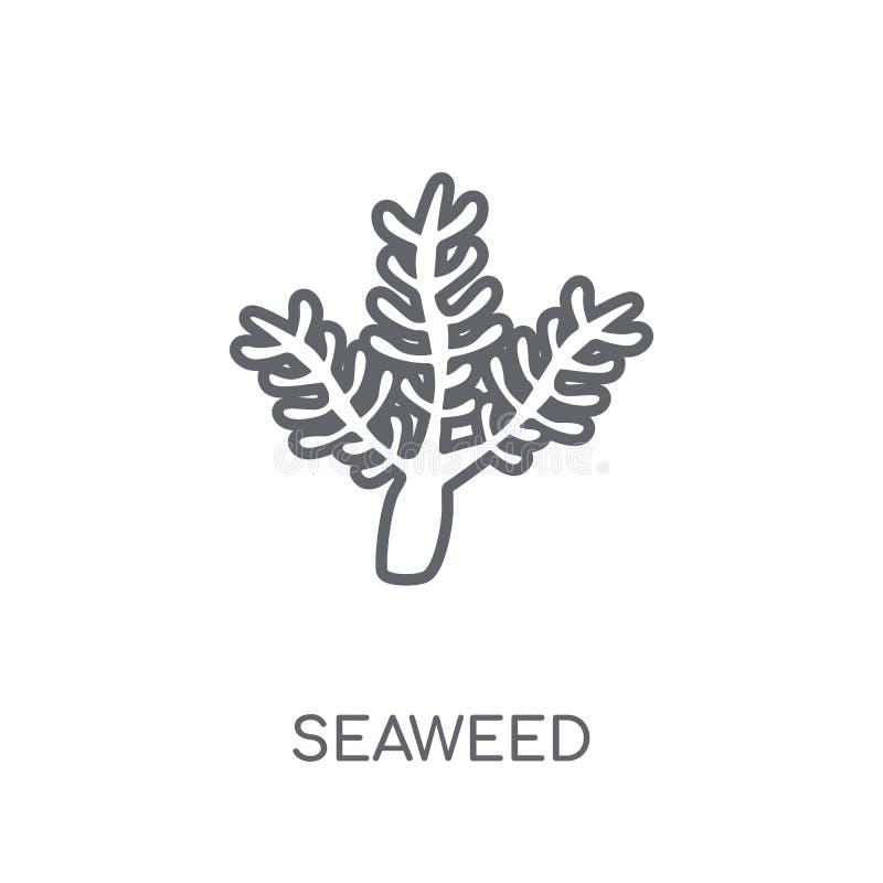 Icona lineare dell'alga Concetto moderno di logo dell'alga del profilo su briciolo illustrazione vettoriale