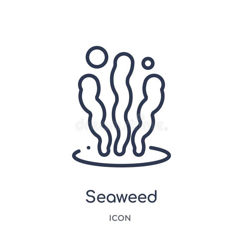 Icona lineare dell'alga dalla raccolta del profilo degli animali Linea sottile icona dell'alga isolata su fondo bianco alga d'ava royalty illustrazione gratis