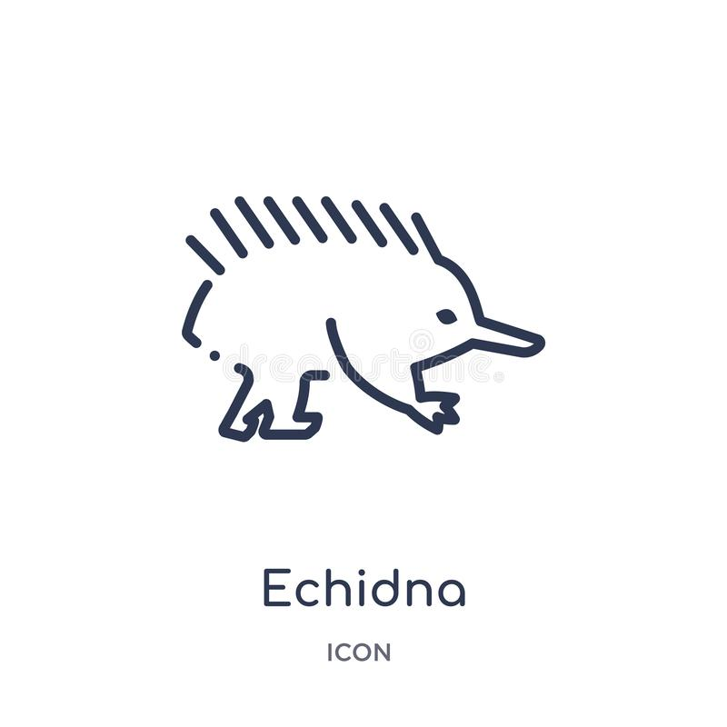 Icona lineare dell'echidna dagli animali e dalla raccolta del profilo della fauna selvatica Linea sottile vettore dell'echidna is royalty illustrazione gratis