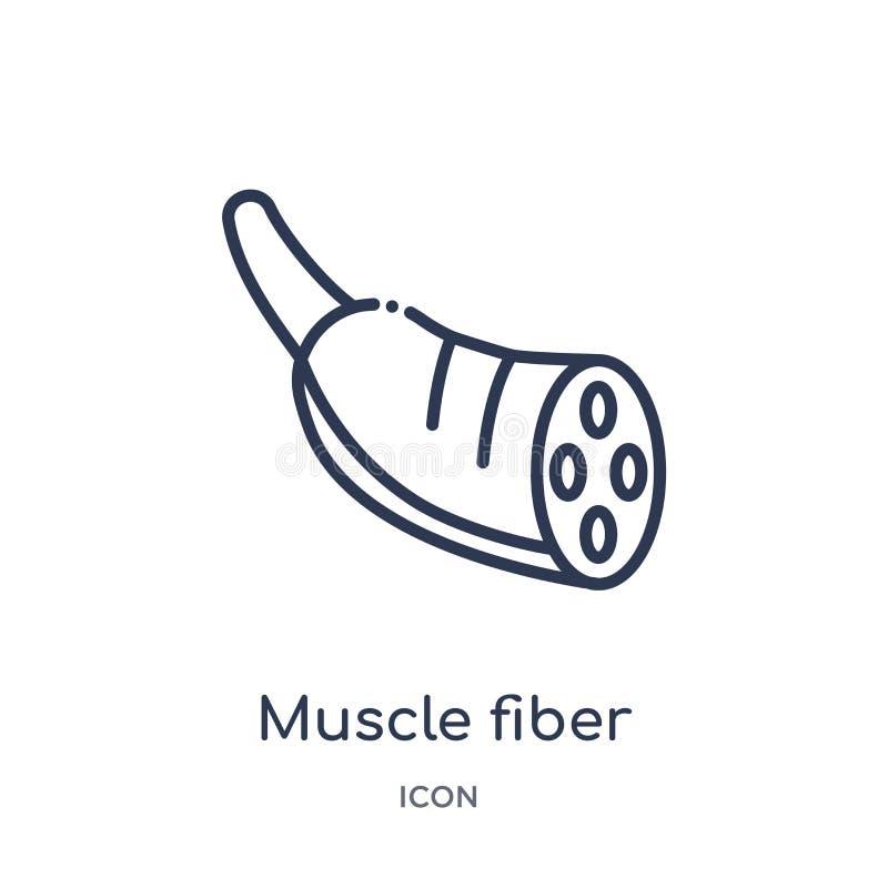 Icona lineare della fibra di muscolo dalla raccolta umana del profilo delle parti del corpo Linea sottile icona della fibra di mu illustrazione vettoriale