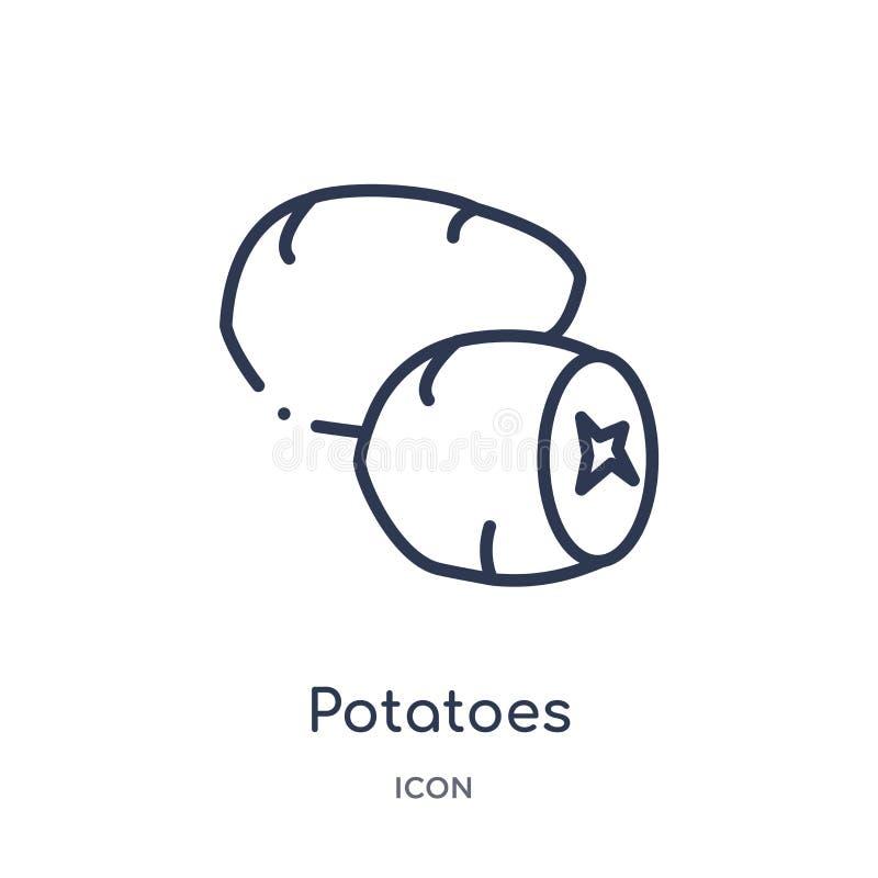 Icona lineare delle patate dalla raccolta del profilo di frutti Linea sottile icona delle patate isolata su fondo bianco patate d illustrazione di stock
