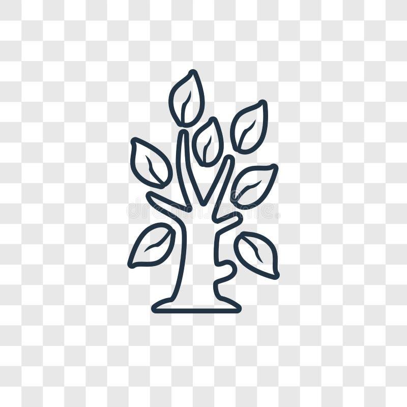 Icona lineare di vettore di concetto dell'albero isolata sul backgrou trasparente illustrazione di stock