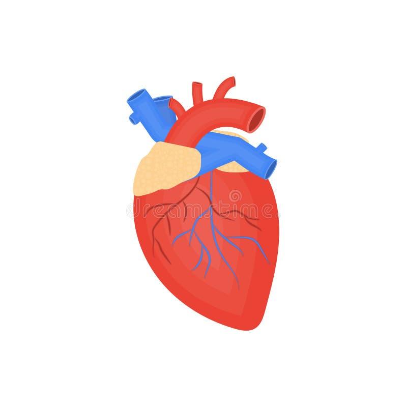 Icona piana dell'organo umano, cuore umano, anatomia, arterie e vene illustrazione di stock