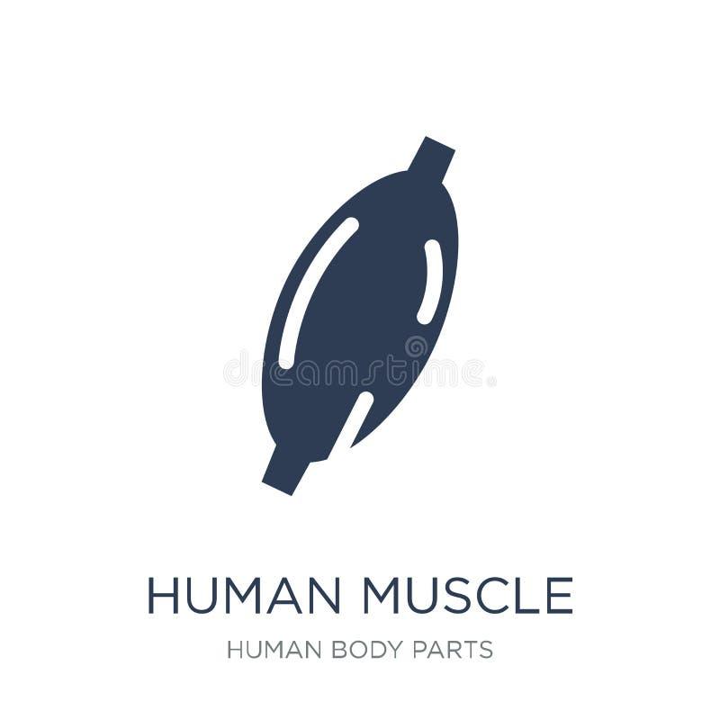 Icona umana del muscolo Icona umana del muscolo di vettore piano d'avanguardia su bianco royalty illustrazione gratis
