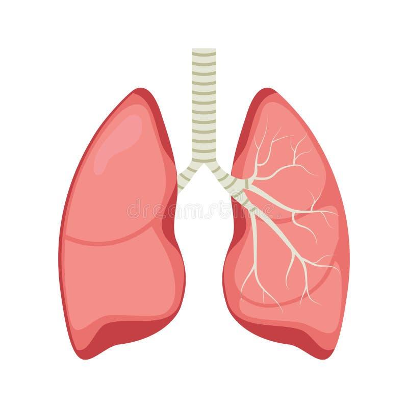 Icona umana del polmone, icona medica piana dell'organo di anatomia sana dei polmoni dell'apparato respiratorio illustrazione vettoriale