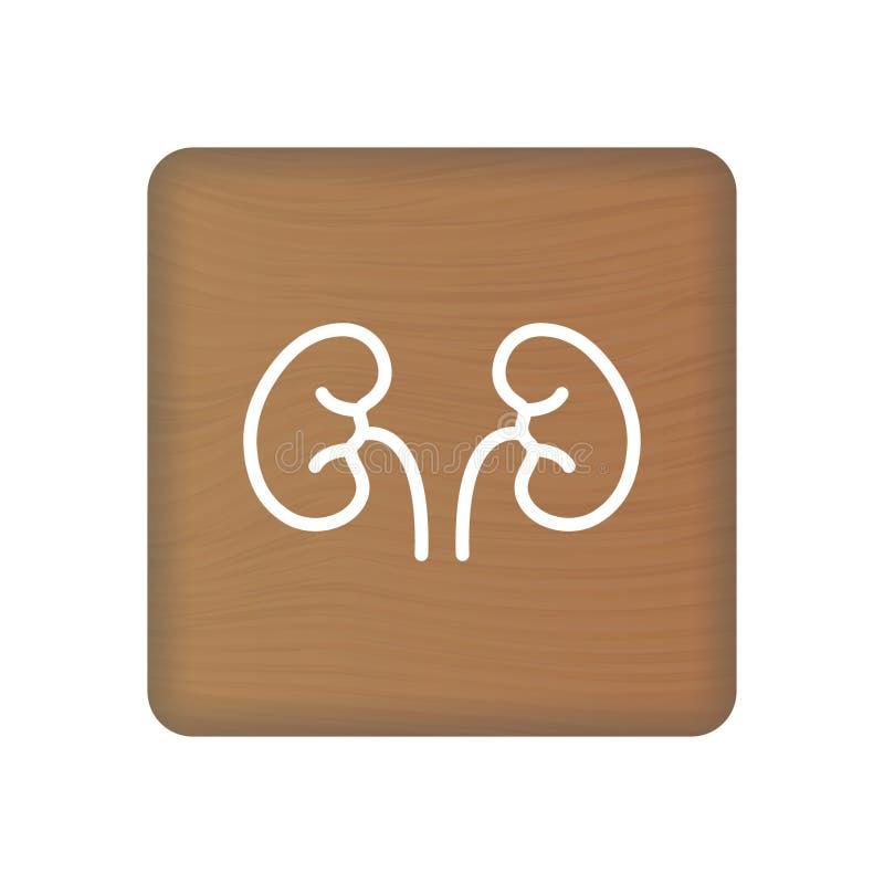 Icona umana del rene Un vettore dell'organo interno Illustrazione umana di anatomia Simbolo del segno per la presentazione medica illustrazione di stock