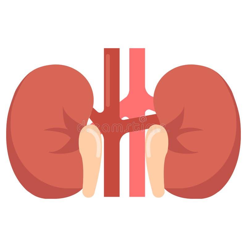 Icona umana dell'organo dei reni, illustrazione di vettore illustrazione di stock