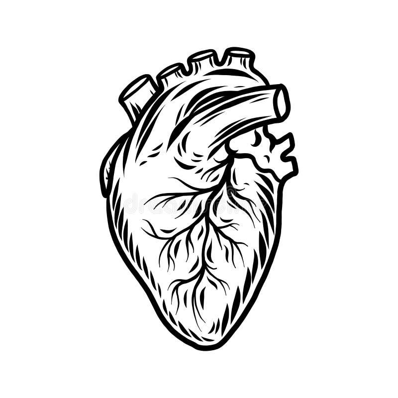 Icona umana dell'organo del cuore, stile disegnato a mano illustrazione di stock
