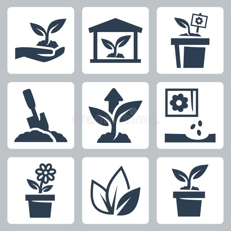 Icone crescenti della pianta di vettore illustrazione vettoriale