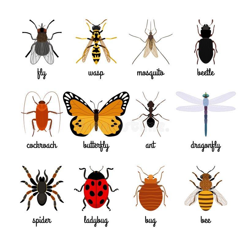 Icone degli insetti illustrazione vettoriale